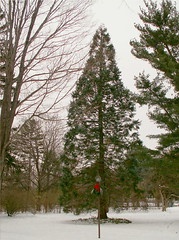 Christmas Time (Stanley Zimny (Thank You for 23 Million views)) Tags: winter red snow tree green nature fir skylands
