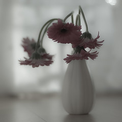 (Fiona * lunasdal) Tags: pink flowers stilllife