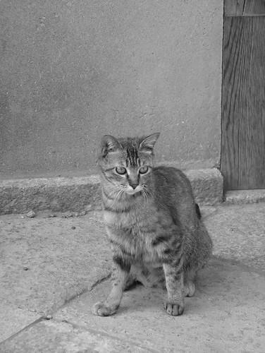 Today's Cat@20070623