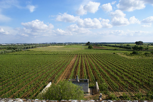 Vera e kuqe nga Puglia