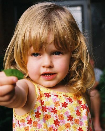 veda holding leaf