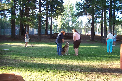 obedience school for dogs in the park3