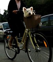 Dog Cargo *