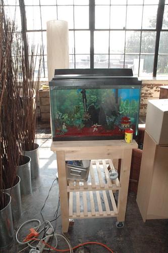 20 gallon fish tank plus kitchen rack
