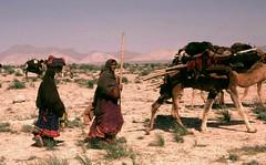 Afghanistan .Kuchi Nomads.(33) (pjwar) Tags: travel afghanistan camels nomads kuchis pjwar kuchinomads