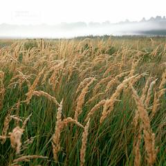 Drifting Off II. (Vincnt) Tags: autumn summer mist 6x6 fog zeiss hasselblad squareformat czechrepublic vincentvega dfc 503cw canoscan9950f photology vincnt fujivelviarvp100 distagoncf504tfle