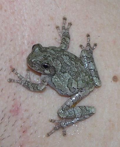 froggy on charles.jpg