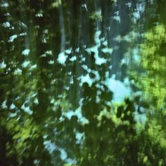 Leafy Greens (-= Bruce Berrien =-) Tags: trees blur pinhole crescentlake pinholga fujiprovia100f