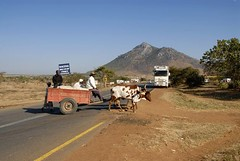 TRUCKING IN MALAWI (Claude  BARUTEL) Tags: africa truck volvo cow transport malawi cart