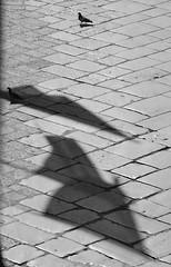 un colombo con ombre (cagiflickr) Tags: pessoa nikon bn basilicata uccelli riflessi bianconero animali biancoenero siluette coppia bandiere centrostorico solitudine lucania venosa lastrada curiosit filosofando colombi bnanimali fotocuriose flickrestrellas cagi yourcountry oltusfotos blackwait neroamet animaazione