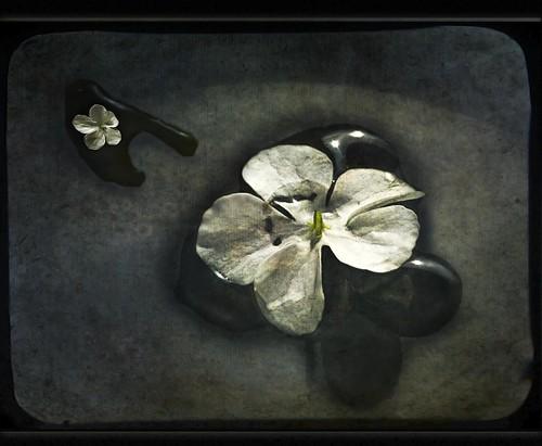 Petals & Sake Bowl