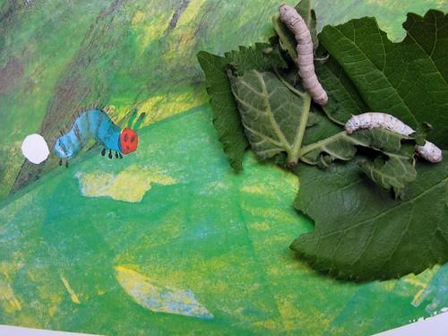 a lagartinha comilona
