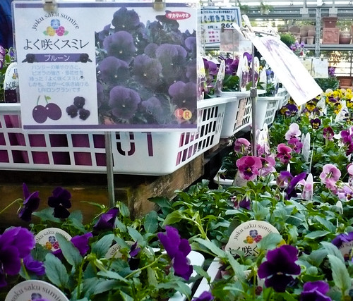 My garden 0113 October 27, 2010