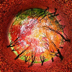 Autumn in a world of your own (edwardhorsford) Tags: autumn red panorama leaves maple colours stitch little arboretum panoramic canadian planet stitched winkworth stereographic upcoming:event=7032003