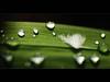 Is This Your Last Ugly Feather (AquariusVII) Tags: green nature diy feathers malaysia ugly cinematography tj terengganu twp d80 bukeh tamronspaf90mmf28dimacro11 hyperdepth teregganu tearsdrop freelensing rainpearls beyondbokeh aquariusvii tjlens tjlenspicture