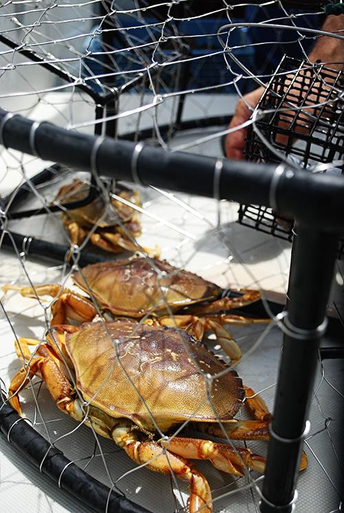 crab_web