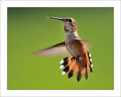 الطيران عند الطيور الجزء الاول 556599248_7c8392d74a
