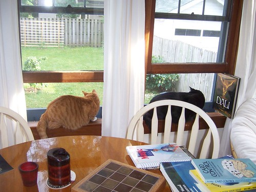 The cats love the sunroom windows