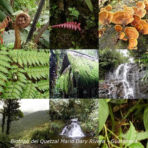 Biotopo del Quetzal Mario Dary Rivera, Guatemala