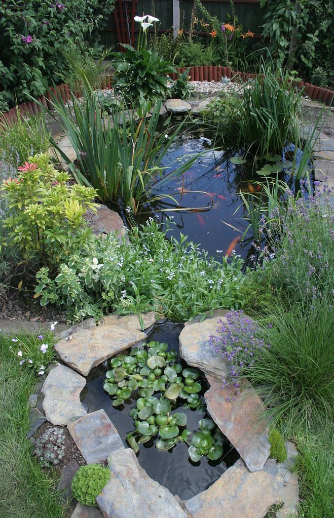 garden pond #2