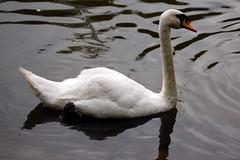 DSC_0075 (indiecraig) Tags: nottingham clumberpark upcoming:event=221261
