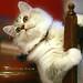 ネコ:G4441