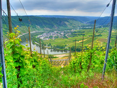 The Mosel Valley (Rich2012) Tags: river germany deutschland vineyard wine valley e grapes hdr mosel