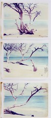 white sand and dead tree (~KIM~) Tags: ocean white tree beach polaroid hawaii sand triptych maui expired 669 autaut rodenstockconversion
