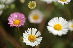 Just simple (gcalsa) Tags: fantasticflower mygearandme musictomyeyeslevel1