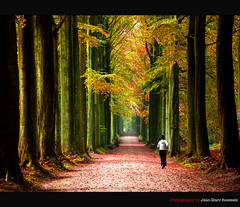 Fall Jogging (jean-marc rosseels (very busy)) Tags: autumn brussels fall colors forest canon belgium planetarium tervuren jogging jogger