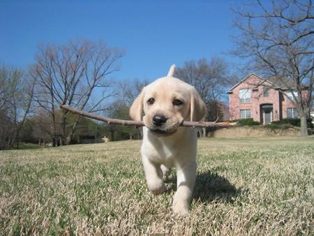 Kako naučiti psa da aportira