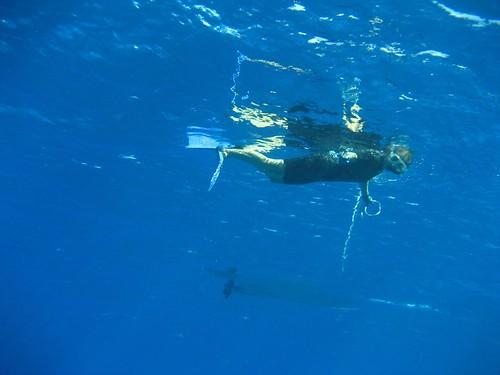 Ginger drift snorkel