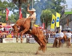 El alazn-tostao (Eduardo Amorim) Tags: horses horse southamerica caballo uruguay cheval caballos cavalos prado montevideo pferde coolest cavalli cavallo cavalo gauchos pferd hest hevonen chevaux gaucho  amricadosul montevidu hst uruguai gacho  amriquedusud  gachos  sudamrica suramrica amricadelsur  sdamerika jineteada supershot   americadelsud gineteada anawesomeshot  americameridionale semanacriolla semanacriolladelprado eduardoamorim