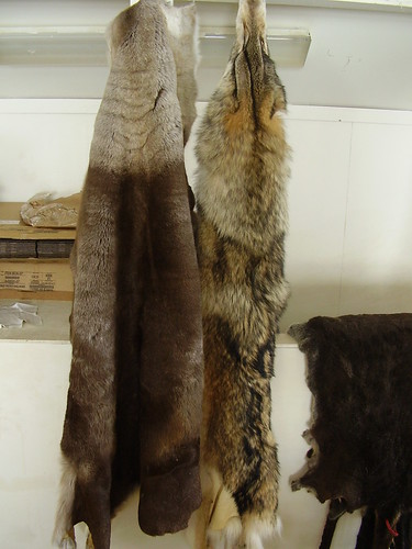 """Shishmaref Tannery- """"Other Soft Things"""""""