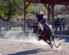 Cowboy (Cepreu K) Tags: horse cowboy riding flickrchallengegroup flickrchallengewinner friendlychallenges thechallengefactory thepinnaclehof tphofweek100