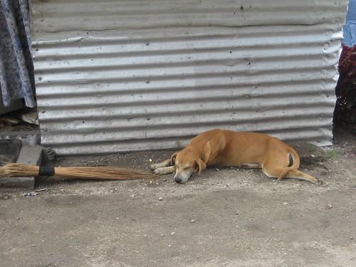 'Chupo' Niko and Sia's dog