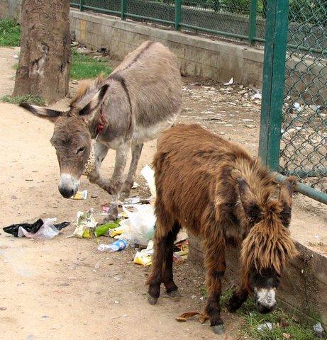it's a donkey's life 250907