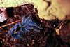 Tarántula (alejocock) Tags: naturaleza nature fauna insect colombia natural campo santaelena medellin reserva antioquia insecto acock reservanatural montevivo alejandrocock biodiversityacockantioquiacolombiamedellinmontevivosantaelenaalejandrocockcamponaturalnaturalezareservareservanatural