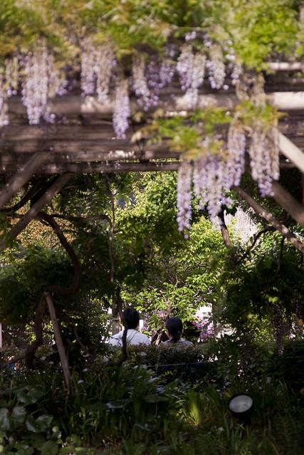 藤の下の庭園