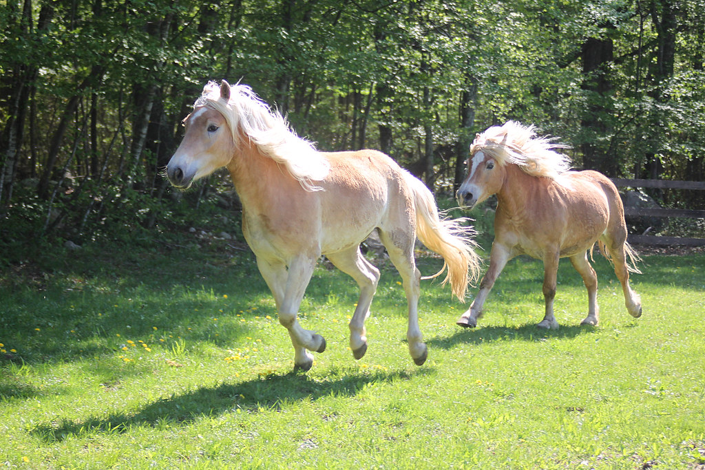 horses 190x