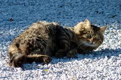 Wow ! (zaffiro81) Tags: cats animals felini gatti zaffiro81