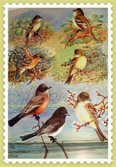 bird nine