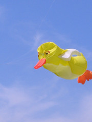 Duck Kite (Paula Bird Parent) Tags: kite duck ducks hampshire kites basingstoke hants basingstokekitefestival
