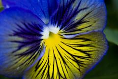Flowers (Chadwise) Tags: plants flower macro canon extensiontube flowersmacro blueribbonwinner rebelxti