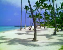 Punta Cana Beach Palms