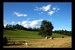 Field and Dogs (! .  Angela Lobefaro . !) Tags: trip travel vacation italy dog holiday castle love dogs nature topf25 architecture countryside interestingness oak firefox topf50 bravo searchthebest quality patterns country gimp explore campagna piemonte nubes linux hay chateau schloss biella frontpage ubuntu coolest castello idyllic piedmont viewfrommywindow castillo chateaux allrightsreserved burg haybales fiocco kubuntu quercia valdengo rotoballe digikam dogsallowed infrontofmyhouse supershot magicdonkey i500 cesvi specland natuzzi xti colorphotoaward aplusphoto hokhiko castellodivaldengo pratone holidaysvacanzeurlaub angiereal 200750plusfaves travelerphotos excellentphotographerawards maxgreco angelalobefaro angelamlobefaro wwwcesviorg bonniescouchview massimilianogreco