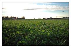 Prairie (ptibat) Tags: nikon d70 champs prairie ptibat
