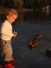 Moritz bei den Enten