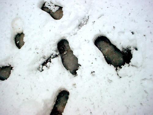 mis pasos