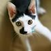 ネコ:G7905